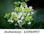 White Flowers Kale