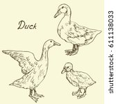 ducks and duckling set  sketch... | Shutterstock .eps vector #611138033