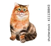cute young siberian cat on...   Shutterstock . vector #611138843