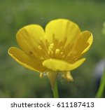 wildflowers close up | Shutterstock . vector #611187413