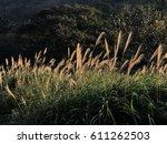 golden fields  | Shutterstock . vector #611262503