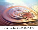 Dry Marple Leaf On Water...