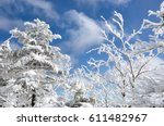 Image Of Snow Covering Trees I...
