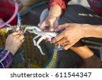 asian fisherman taking spider... | Shutterstock . vector #611544347