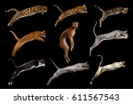 Stock photo group of cats and one clumsy dog in jumping on isolated black background side view 611567543