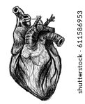 anatomical heart | Shutterstock . vector #611586953