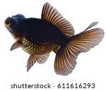 black goldfish isolated on white | Shutterstock . vector #611616293