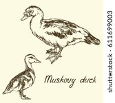 south american muscovy duck and ... | Shutterstock .eps vector #611699003