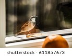 Beautiful Sparrow Against The...