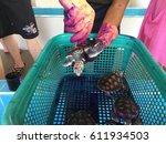 turtles in tortoise breeding... | Shutterstock . vector #611934503