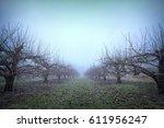 Foggy Winter Sky Over Apple...