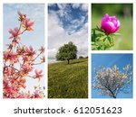 collage of photos of plants and ... | Shutterstock . vector #612051623