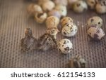 Close Up Of Baby Quail In An...