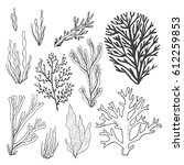 trendy summer seaweed design.... | Shutterstock .eps vector #612259853