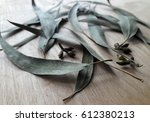 eucalyptus leaf.  | Shutterstock . vector #612380213