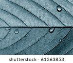 texture of the wood sheet | Shutterstock . vector #61263853