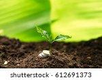 sapling in the soil green... | Shutterstock . vector #612691373