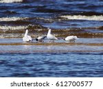 Seagulls Dancing For Spring