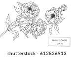 drawing flowers. peony flower... | Shutterstock .eps vector #612826913