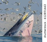Bryde's Whale  Eden's Whale In...