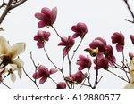 magnolia | Shutterstock . vector #612880577