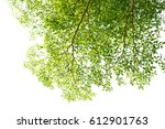 green leaves isolated on white... | Shutterstock . vector #612901763