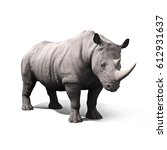 Rhinoceros Isolated On A White...