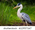 lovely shot of heron bird... | Shutterstock . vector #612957167