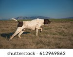 german shorthaired pointer... | Shutterstock . vector #612969863