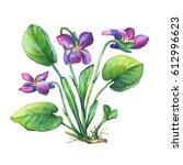 illustration of fragrant... | Shutterstock . vector #612996623