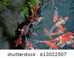 swimming red orange white fish... | Shutterstock . vector #613022507