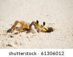 Ghost Crab At Work