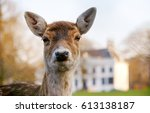 Fawn Deer Portrait