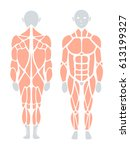 anatomy of human muscle in... | Shutterstock .eps vector #613199327