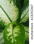 Small photo of Swirl Leaf