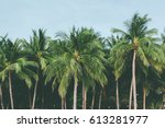 coconut palm trees  beautiful... | Shutterstock . vector #613281977