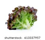 red oak lettuce | Shutterstock . vector #613337957