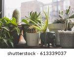 indoor garden in the windowsill ... | Shutterstock . vector #613339037