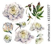 watercolor collection of white... | Shutterstock . vector #613353377