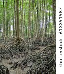 mangrove forest trees on mud... | Shutterstock . vector #613391987