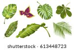 Stock vector vector tropical plants and leaves realistic set isolated on white background botanical exotic 613448723