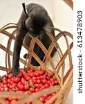 Small photo of Black cat trying to get acerola from the basket