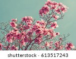 Toned Photo Of Magnolia Tree...