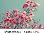 Toned Photo Of Magnolia Tree...