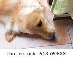 Small photo of dog sleep heaf shot