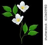 Branch Of Jasmine Flowers...