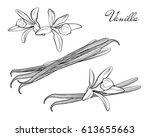 vanilla pods sticks flavoring... | Shutterstock .eps vector #613655663
