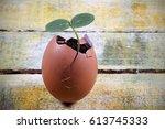 seedlings grow in the eggshell... | Shutterstock . vector #613745333
