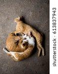Three Napping Cat
