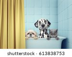 Stock photo cute two dogs and cat in the bath 613838753